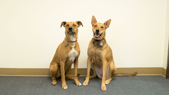 SurveyConnect Dogs, Brodie and Keilani